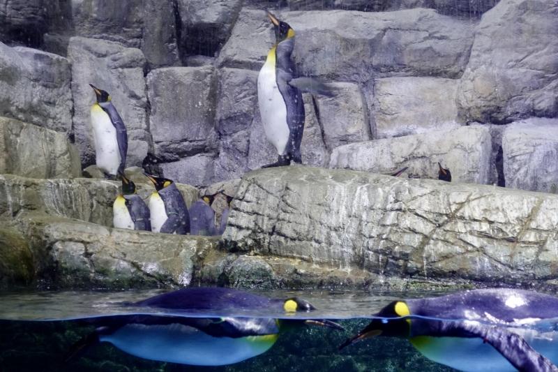 Mother Farm & Hakkeijima Aquarium Group Tour (Semi Private)
