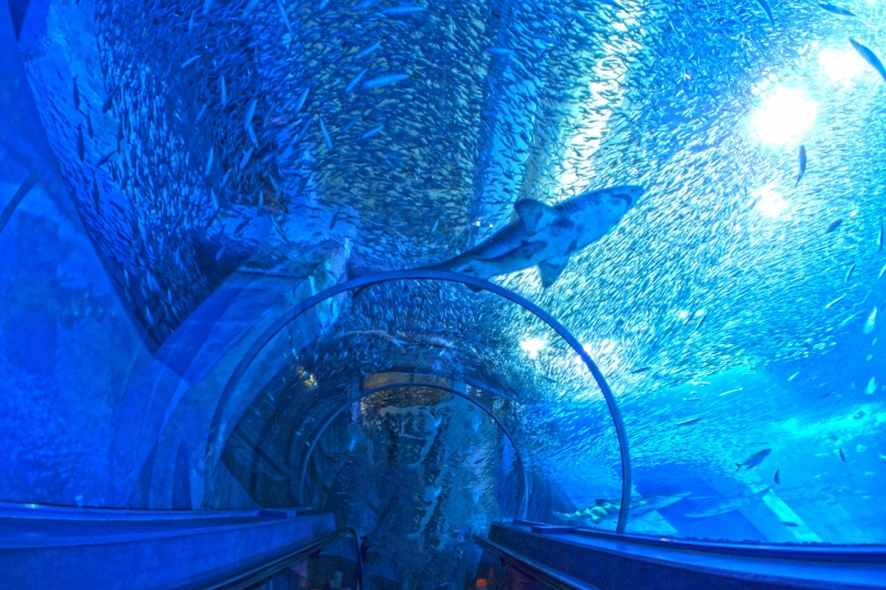 Yokohama Zoo & Hakkeijima Aquarium Group Tour (Semi Private)