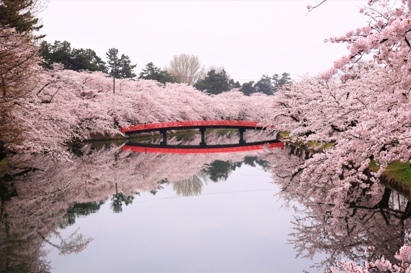 Hirosaki Park- you can get a view of Hirosaki Castle