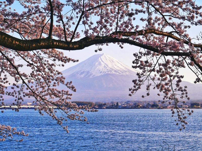 櫻花富士山