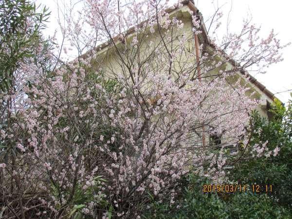 Ginkaku or Silver Pavilion