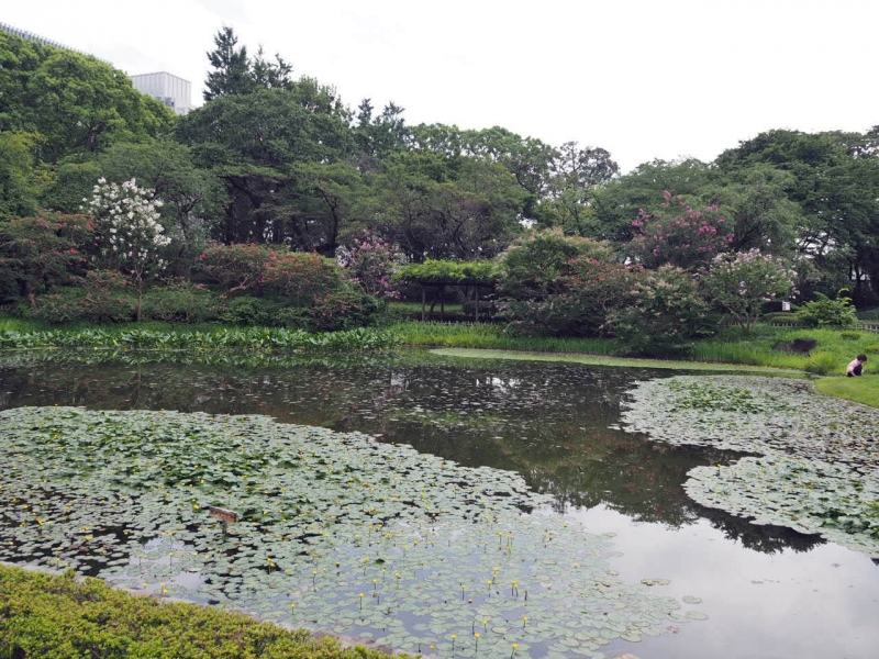 Ninomaru garden in Edo castle : This is a lovely traditional Japanese style garden originally built in early 17th century.