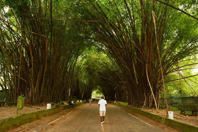 Botanical garen in Ivory Coast