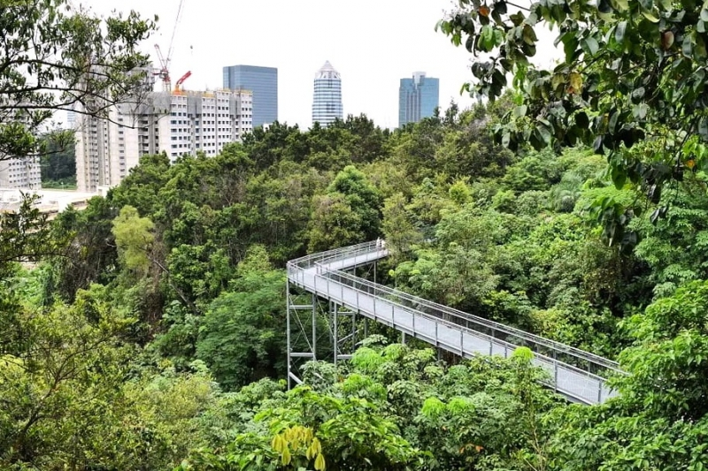 Meandering bridge of the Forest Walk