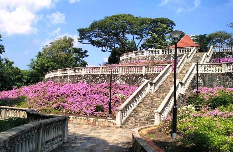 Bougainvillea in bloom at Telok Blangah Hill Park Terrace Garden