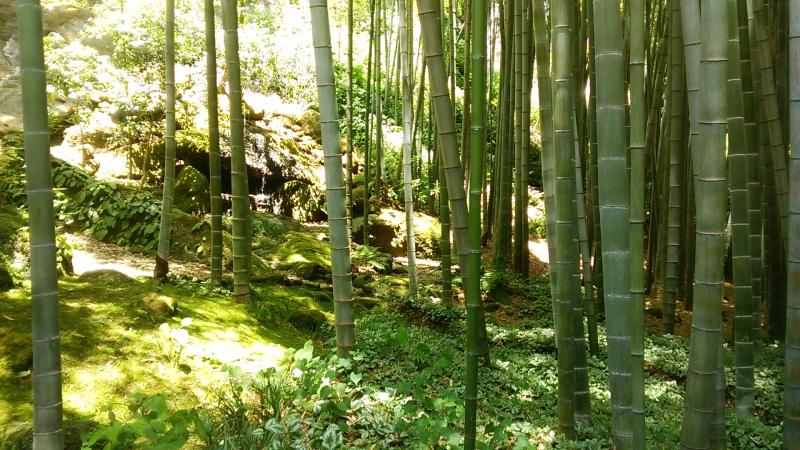 A beautiful bamboo garden in Hokoku-ji temple