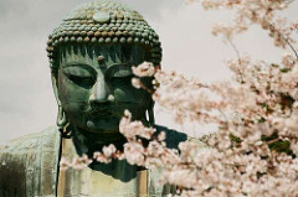 Kamakura Daibutsu in Koutoku-in