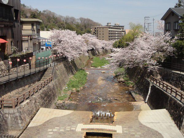 Beautiful cherry blossoms on both sides of Arima River
