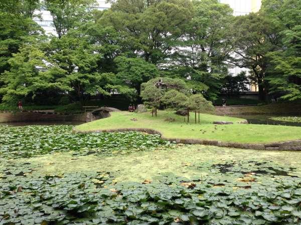 Lotus flowers cover on the pond of Koishikawa-Korakuen