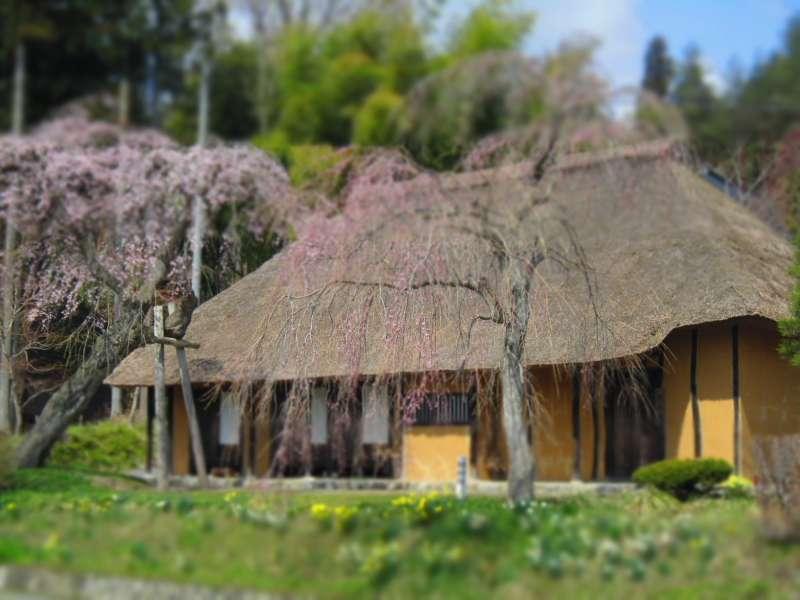 Ein typisches Bauernhofhaus mit dem Rieddach in diesem Gebiet. Leider immer weniger davon zu sehen. Heute benutzt man dieses Gebäude zur Vorbereitung auf die Rituale und Feste der Tempelmitglieder.