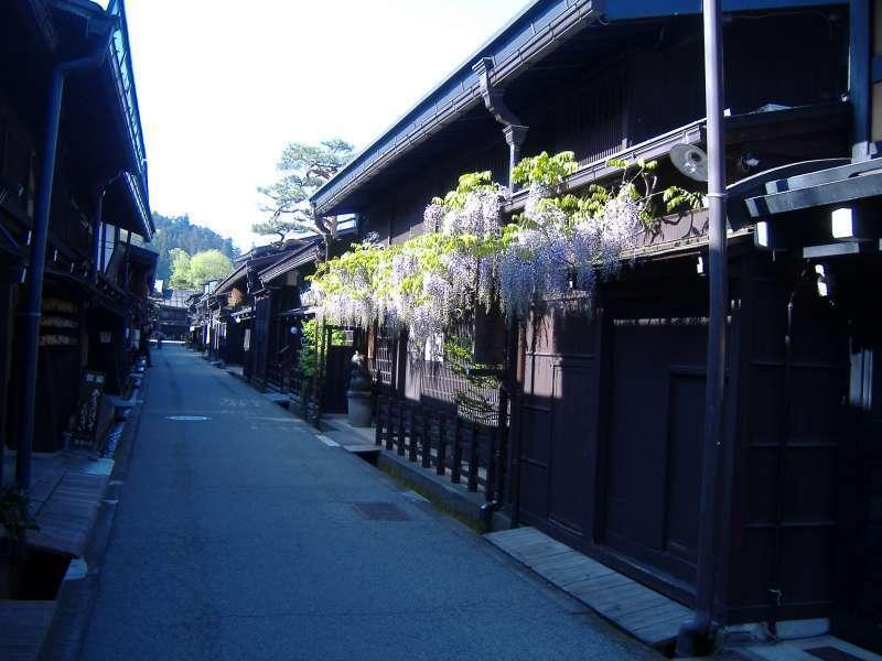 Wisteria bloom at Sannomachi old merchant street in Takayama