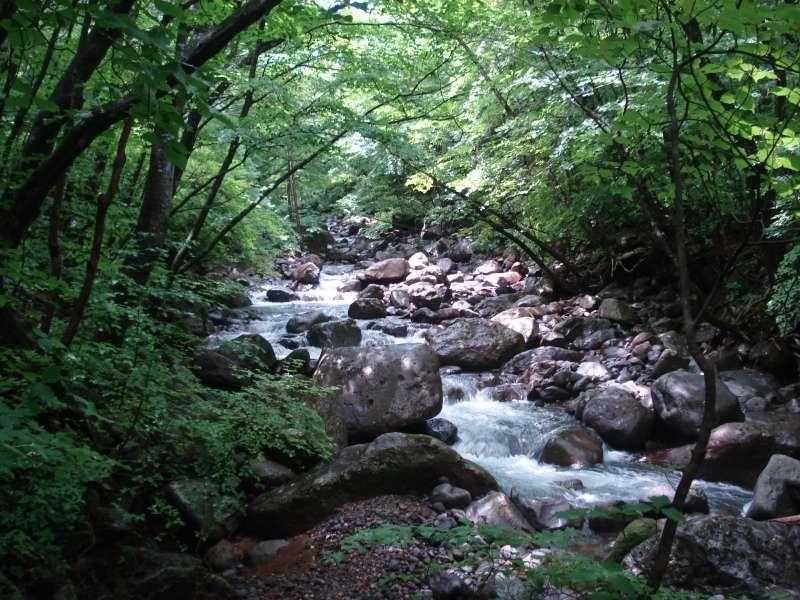 Stream in Heisei-no-mori Forrest