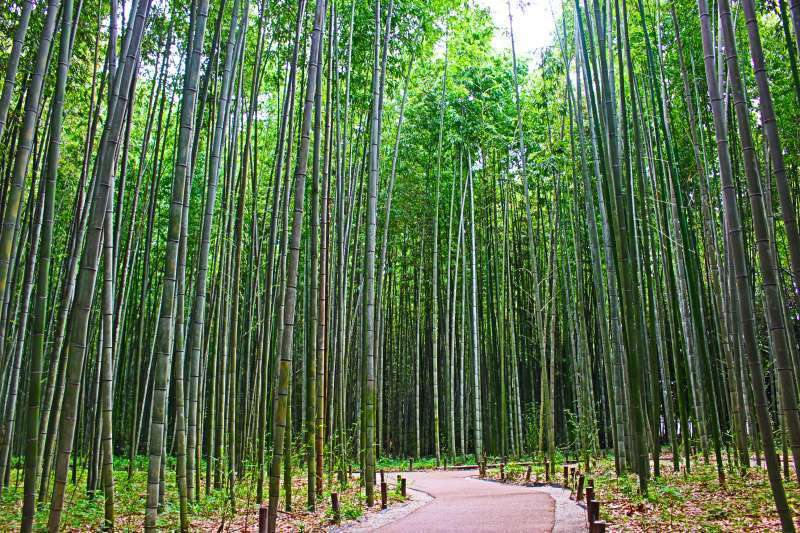 The Bamboo Forest. Quiet and serene. Enjoy the sound.