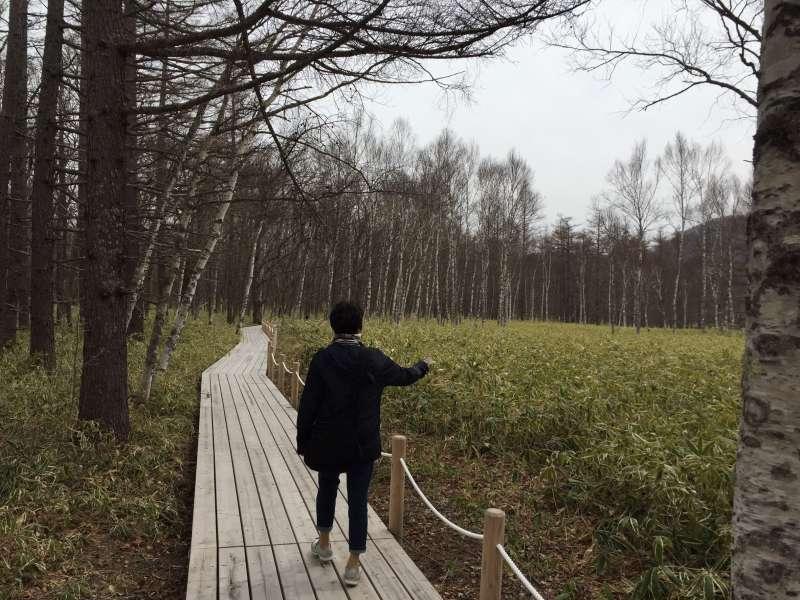 Forest walk in Sengokubara