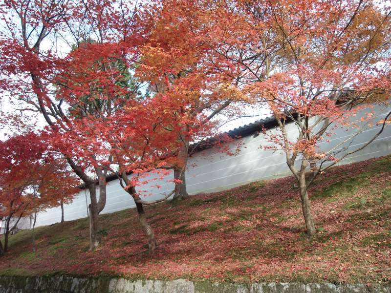 Momiji around Manshuin
