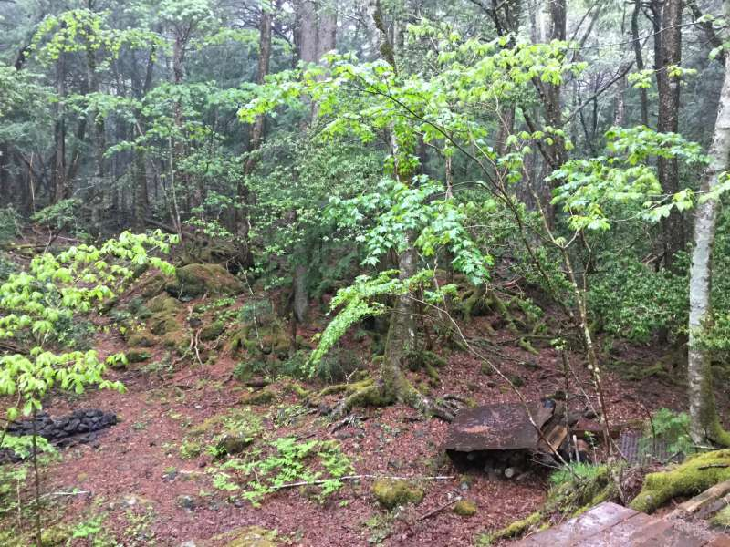 Aokigahara Forest: Forest trail ( Optional )