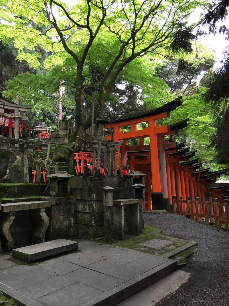 Not only the vermilion shrine gate tunnels, there are really large number of shrine gates along the mountain path.