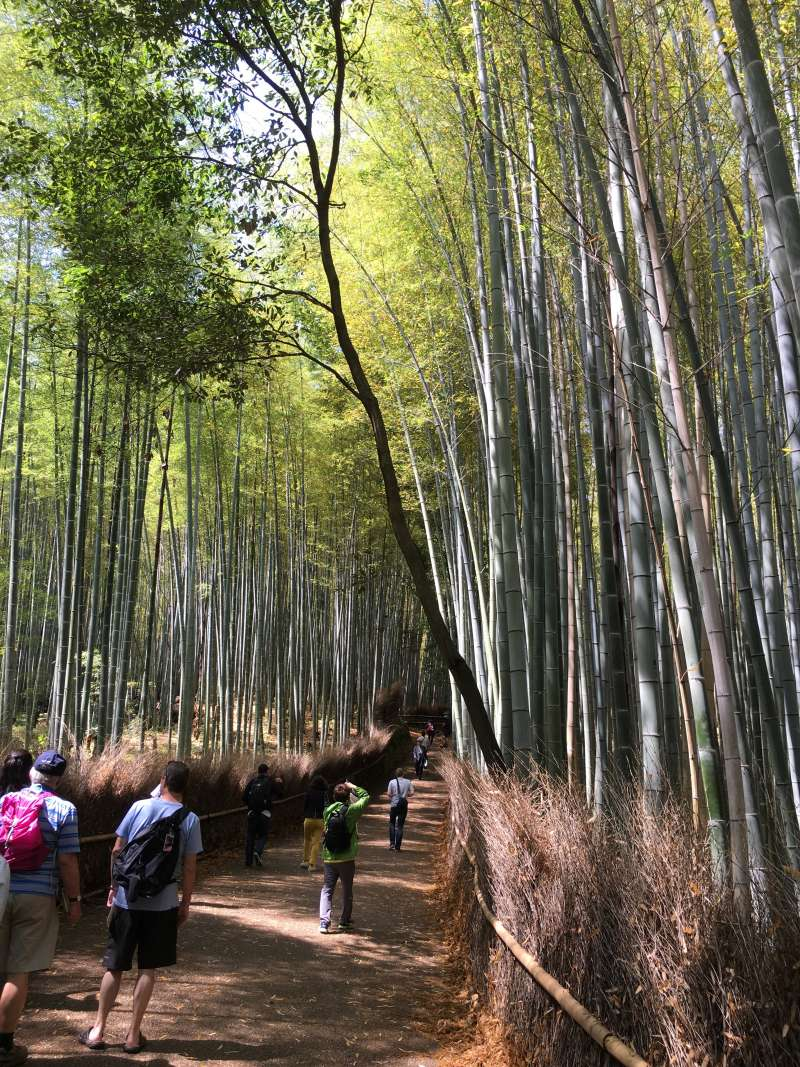 The cool breeze always blows through the bamboo grove.