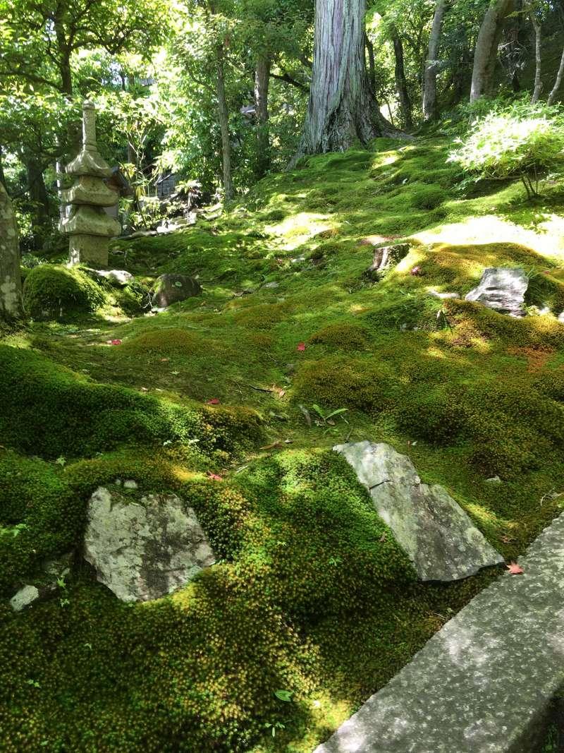 beautiful moss garden at Jojakko-ji Temple