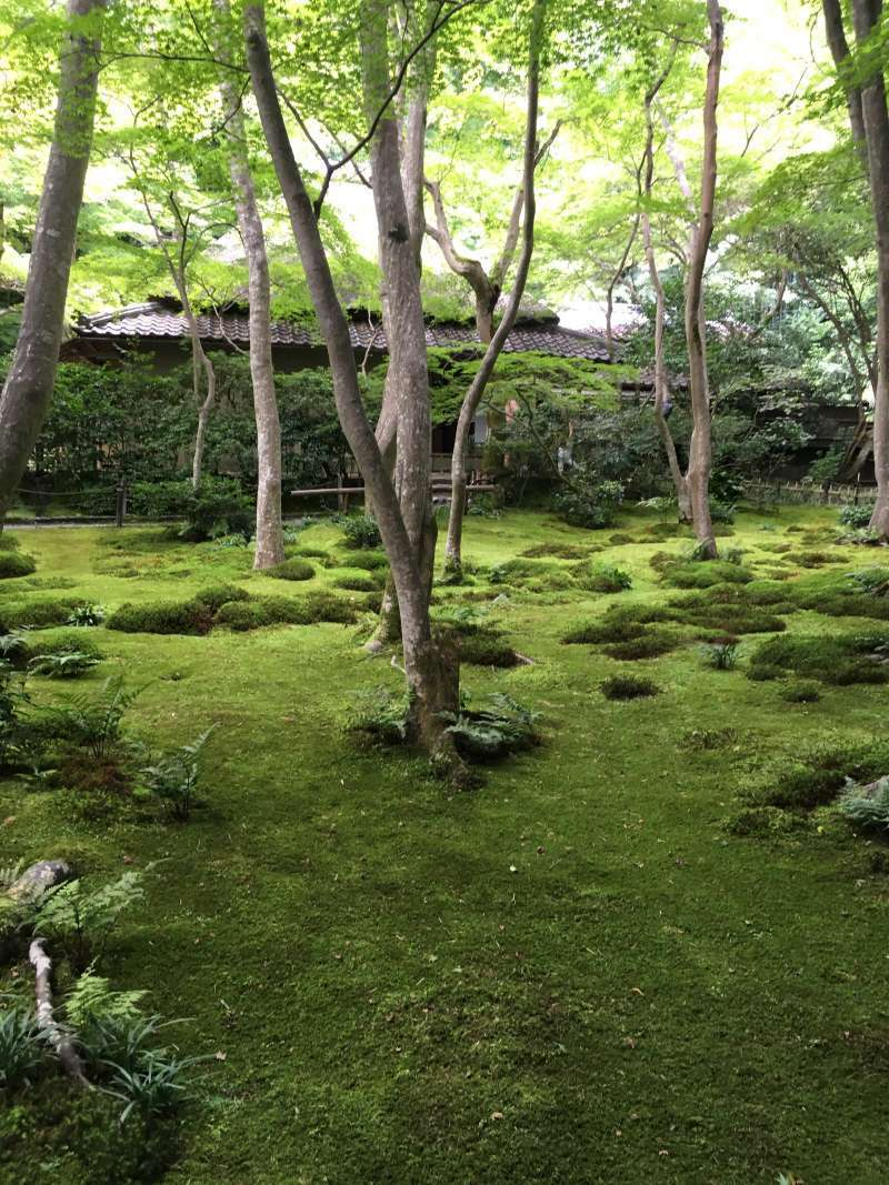 Gioji Temple with a very beautiful and tranqui moss garden. This temple has a tragic love story.......