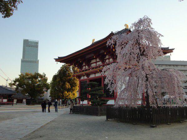 Abeno Harukas and Gokuraku-mon Gate in spring