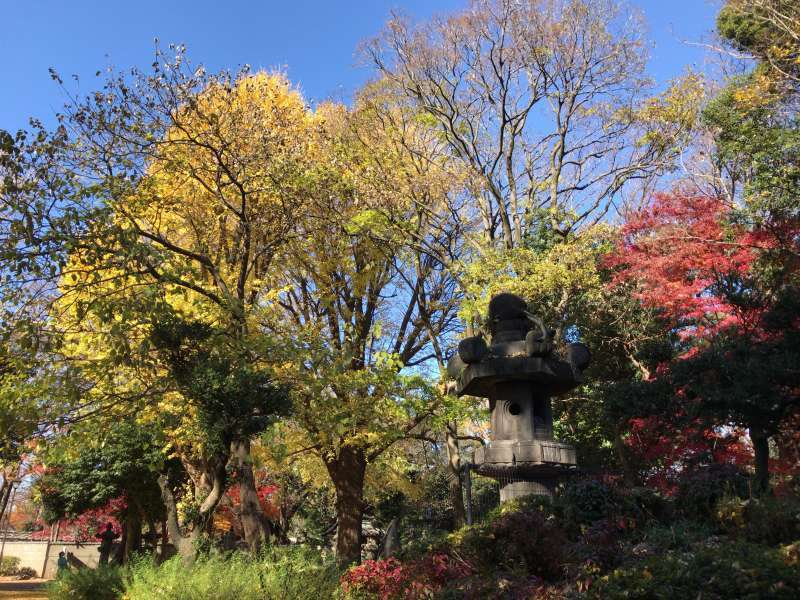 Autumn leaves in Ueno Park