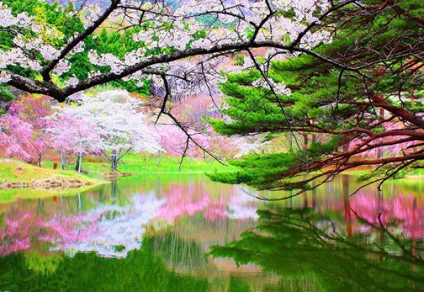Spring is at its height in Japanese gardens.