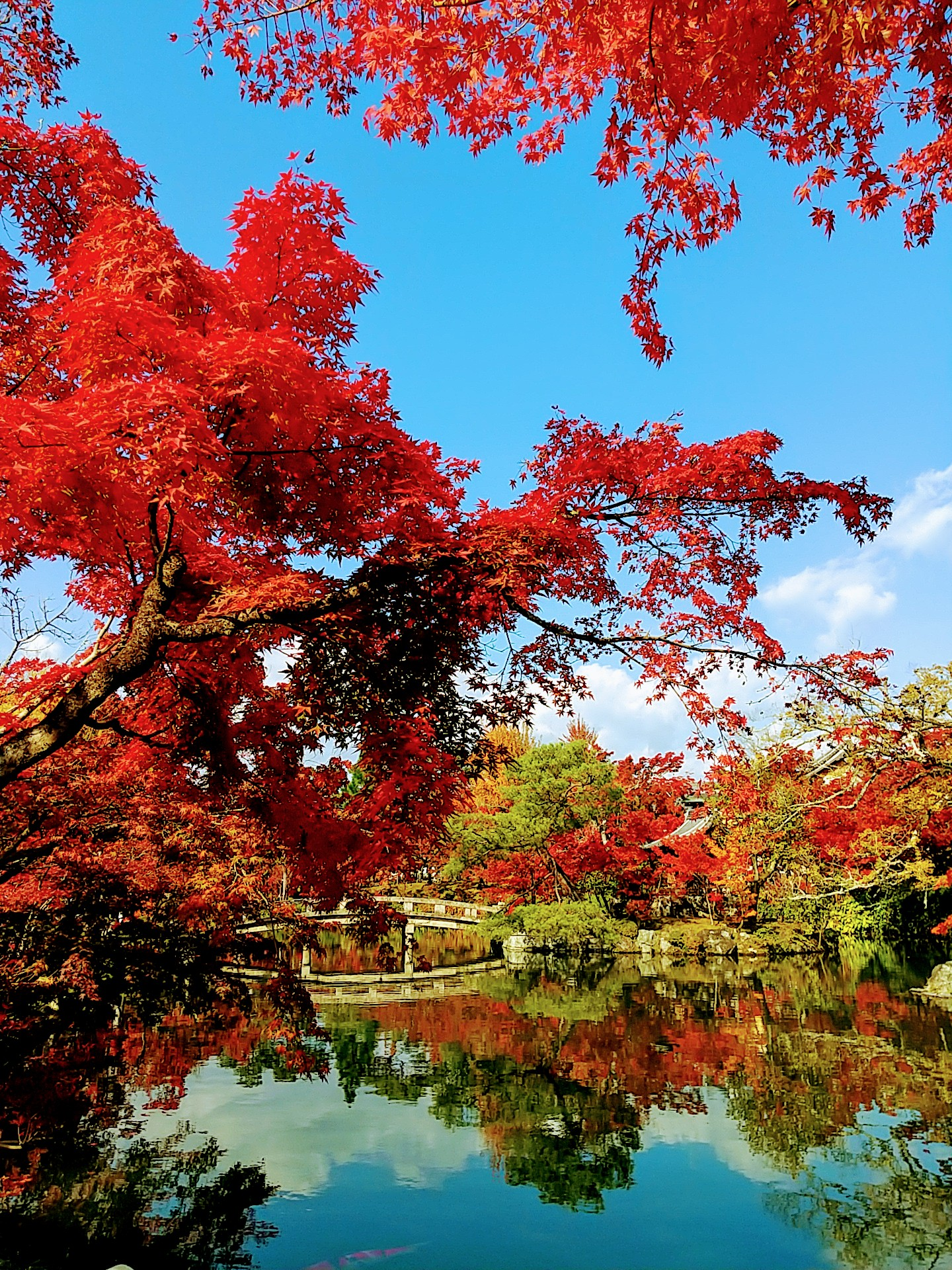 Eikando, the marvelous world of red