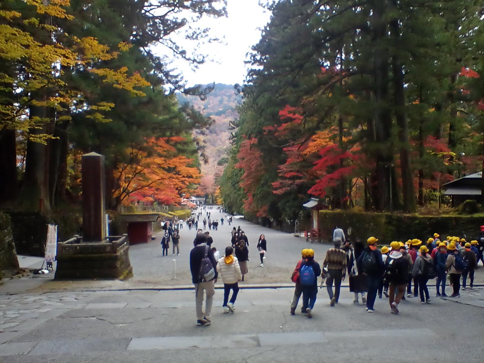 Nikko (Nov. 6, 2020)