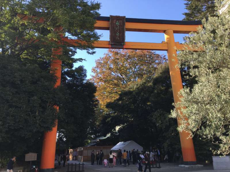The 15 meters-high Torri gate in the Hikawa shrine which is the largest wooden Torii in Japan.