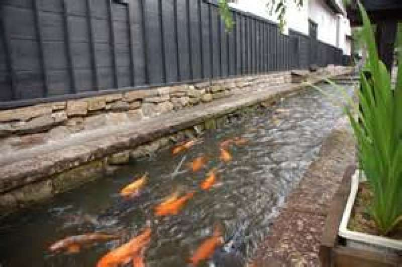 Hundreds of colored carp in the river are healing you. If you want,you can enjoy feeding them.