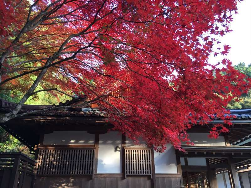 Autumn leaves in Kyoto
