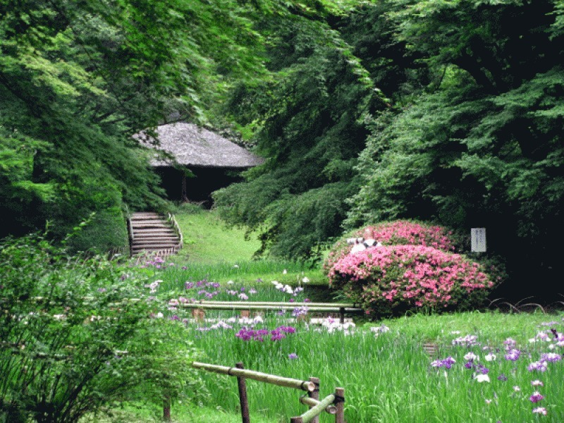 8a. Inner Garden of Meiji Shrine (Iris flower garden)