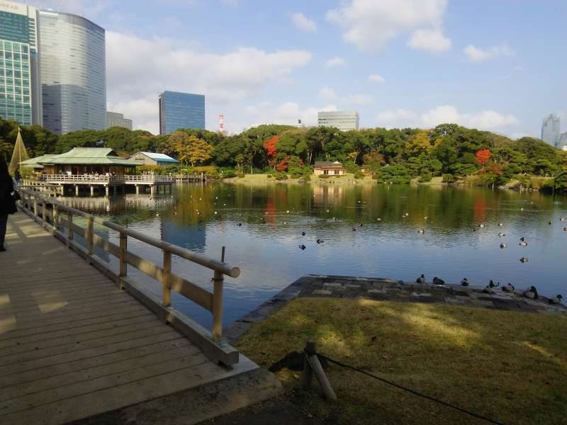Hama Rikyu Gardens is a beautiful Japanese garden in the center of Tokyo.