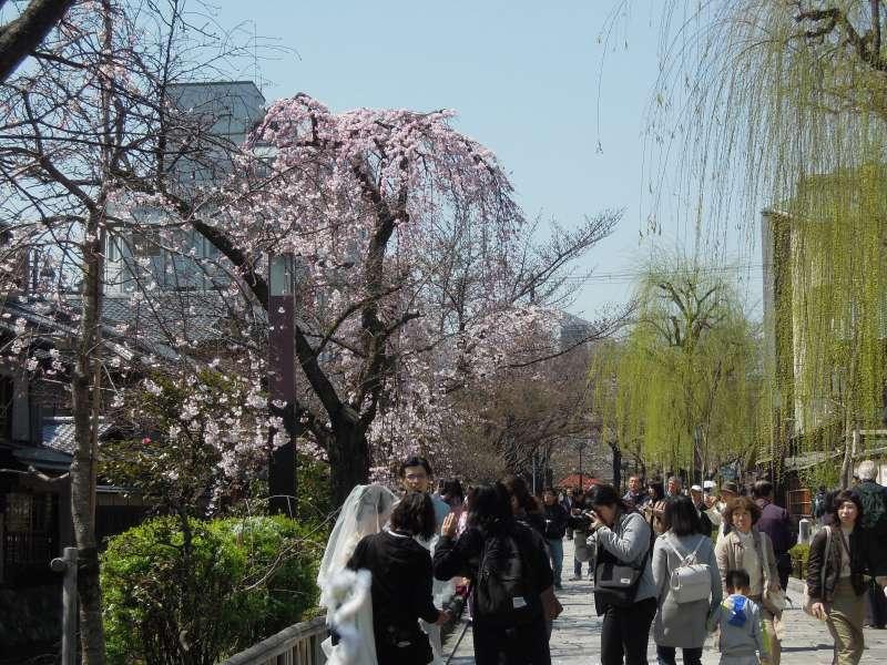At Gion Shimbashi
