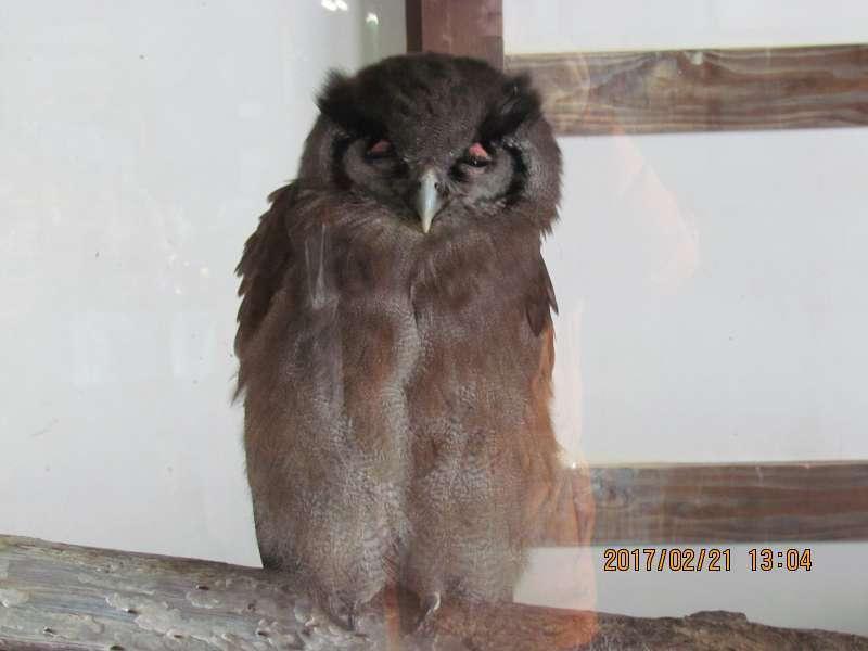 Owl at Matsue Vogel Park