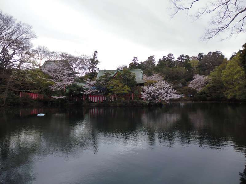 This photo was taken in Inokashira Park. Inokashira literally means the source of well water in that water from here was drawn into the center of Edo(now Tokyo) and utilized as drinking water for residents of Edo.