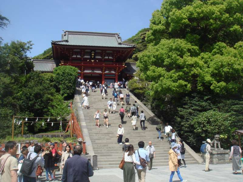 Tsurugaoka Hachimangu shrine dedicated to the Shogun, Minamoto Yoritomo, is so magnificent and a large number of visitors come to pray every new year week.