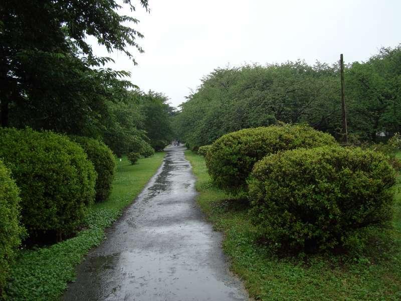 Koishikawa Botanical Garden in rainy season