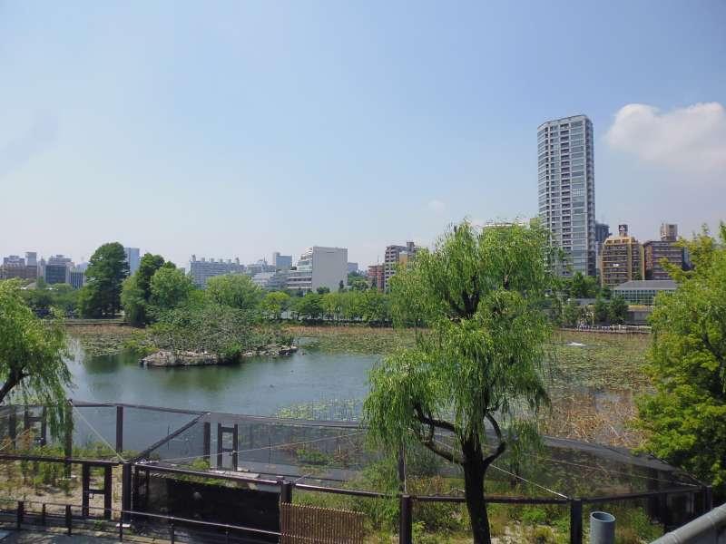View of Shinobazu pond from Ueno zoo