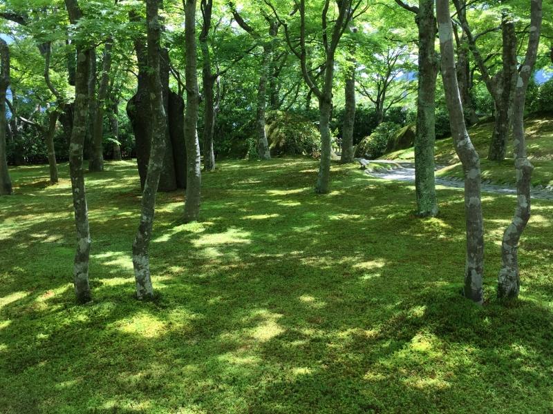 Strolling in green moss carpet of Gora Museum