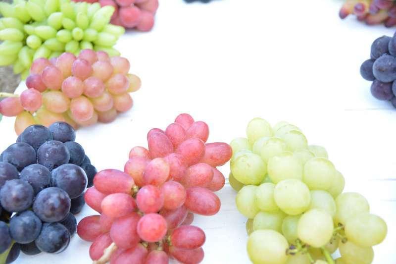 福冈农园种着40多种的葡萄树。其中您可以试吃共6种的葡萄,一定会享受日本夏秋季的美味。