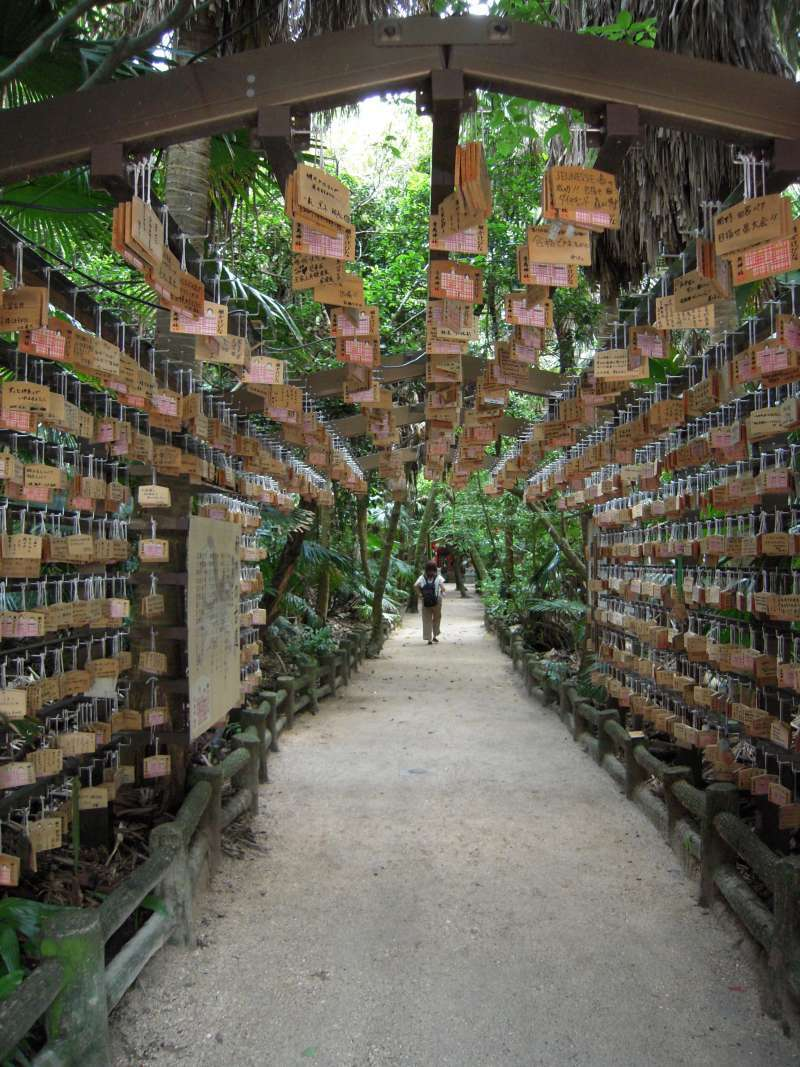 There are lots of power spots in Miyazaki, and Aoshima shrine is one of them.