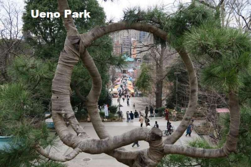 6. Ueno Park & Lovely Yanaka Old Town
