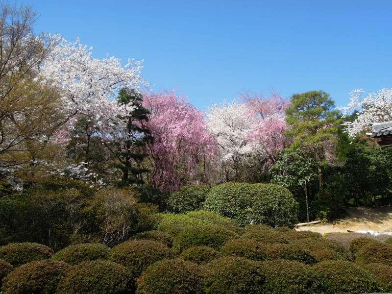 At Ryoan-ji Temple, Kitayama