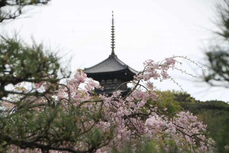 Perfect Sankei-en Garden