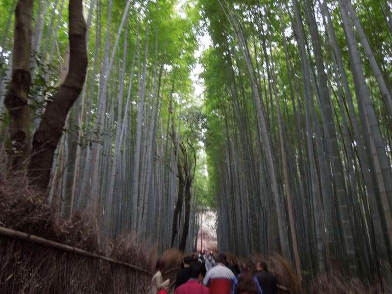 En el caminito de bambú sentiría un atmósfera tan especial.