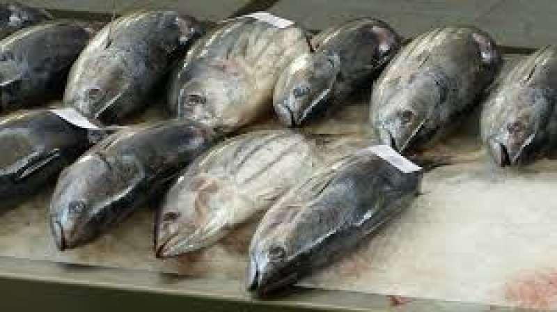 Tuskiji Fish Market.