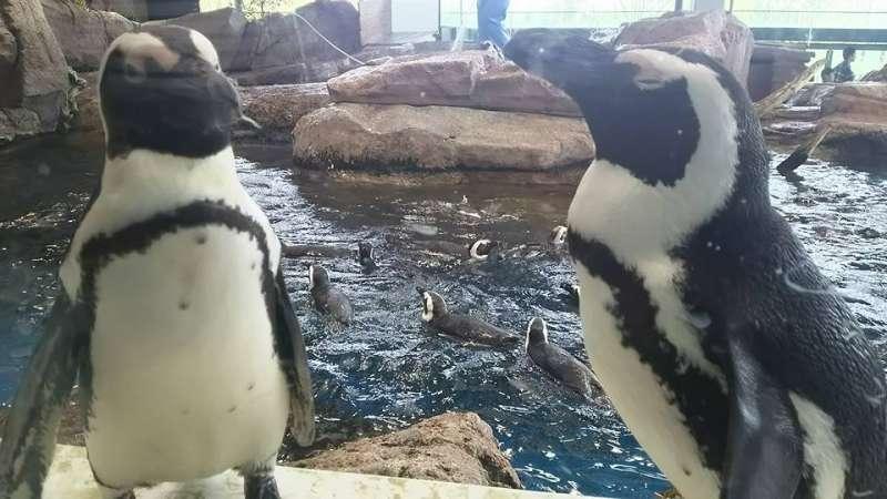 Penguins@Kyoto Aquarium