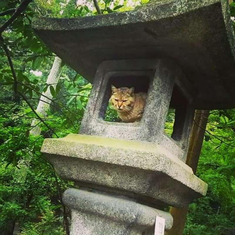 Wild Cat@Fushimi Inari Shrine